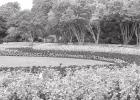 Dallas Arboretum and Botanical Garden Reopens on June 1st with Advance Ticket Reservation Required